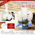 【ベストセレクト】大輪胡蝶蘭 3本立ち 29輪前後 白