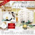 【プレミアム】大輪胡蝶蘭 3本立ち 34輪前後 白