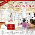 【ベストセレクト】高級大輪胡蝶蘭 5本立ち 50輪前後 白