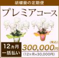 【プレミア】胡蝶蘭の定期便12ヶ月 一括お支払い