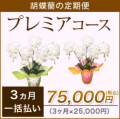 【プレミア】胡蝶蘭の定期便3ヶ月 一括お支払い