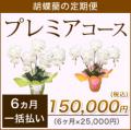 【プレミア】胡蝶蘭の定期便6ヶ月 一括お支払い