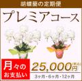 【プレミア】胡蝶蘭の定期便 月々のお支払い(3・6・12ヶ月)