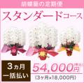 【スタンダード】胡蝶蘭の定期便3ヶ月 一括お支払い