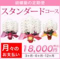 【スタンダード】胡蝶蘭の定期便 月々のお支払い(3・6・12ヶ月)