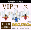 【VIP】胡蝶蘭の定期便12ヶ月 一括お支払い