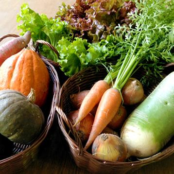 わっさんの畑から|秋野菜