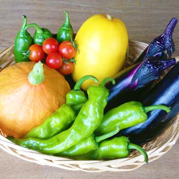 わっさんの畑から|春夏野菜