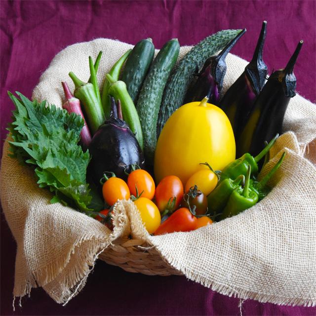 わっさんの畑から|夏野菜