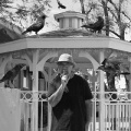 Eddy Detroit / Black Crow Gazebo