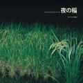 Reiko Kudo (工藤礼子) / Rice field silently riping in the night (夜の稲)