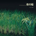 Reiko Kudo (工藤礼子) / Rice field silently riping in the night (夜の稲)