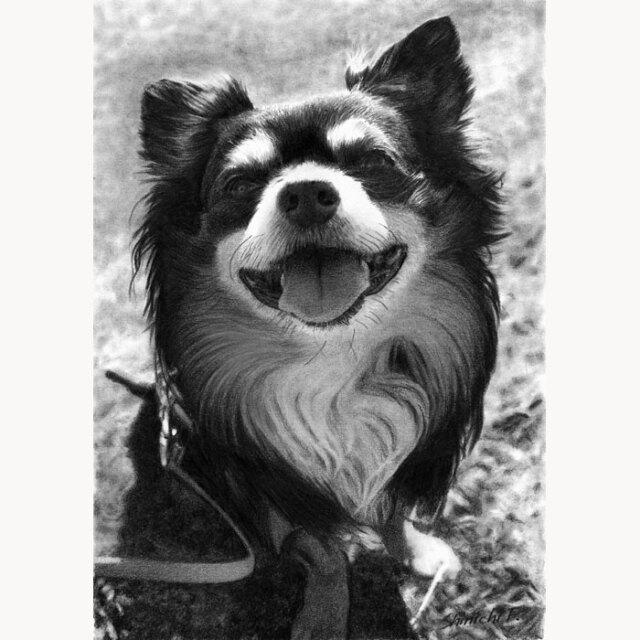 鉛筆肖像画(犬)