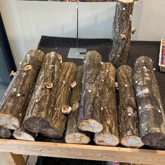シイタケの栽培に挑戦!原木椎茸のと115