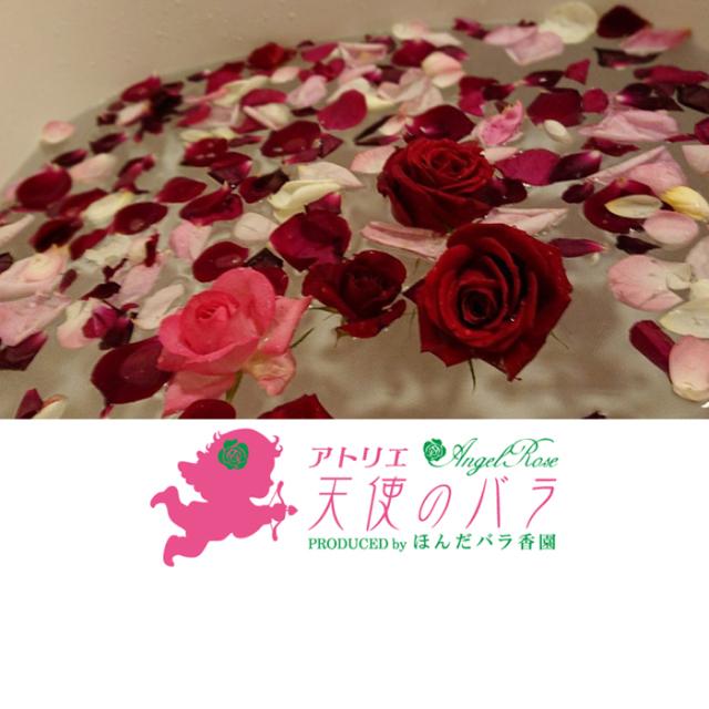 発送は5/11から アトリエ 天使のバラ~Angel Rose~