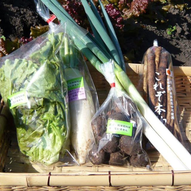 旬の野菜玉手箱ギフト