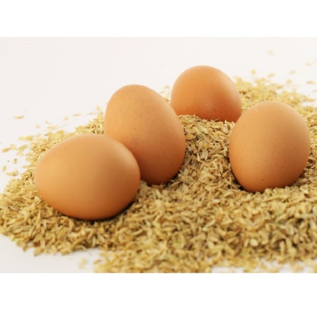 野上養鶏場卵背景白
