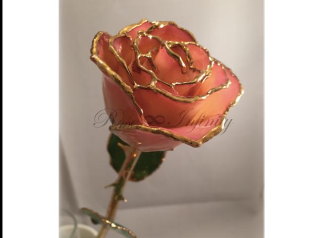 高級・特別なバラ フラワーギフト専門店 フラワーショップリズカ 24Kゴールドカラーローズ ピンク&クリーム