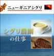 ニューギニア シグリ 【生豆】