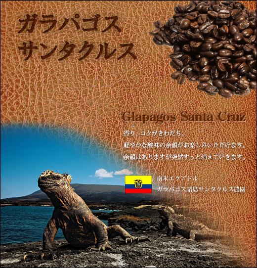 ガラパゴス サンタクルス【生豆】