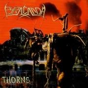 PYRACANDA (Germany) / Thorns