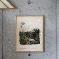 1800年代初頭のボタニカルアートの復刻ポスター。