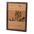 鉄刀木を加工し、流れるような縞模様の木目が特徴的なフレームです。