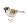 リアルな造形の小鳥たち 本物みたいな小鳥のオブジェです。