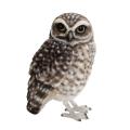 リアルな造形の小鳥たち本物みたいな小鳥のオブジェです。