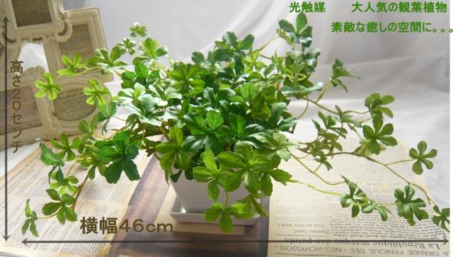 光触媒 観葉植物 アイビー【interia1】【ROMANTIC】【ロマンティック】
