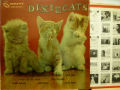 DIXIE CATS デキシー・キャッツ / Dixieland All Stars
