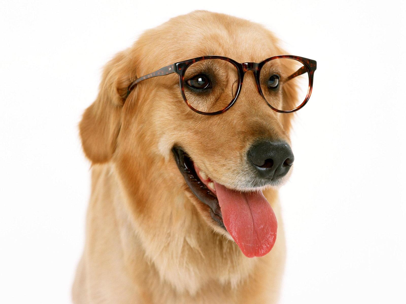「特注食  1オーダー 4kg」ドライフード 現在の愛犬に最適なレシピを作成し世界にひとつのオリジナルドライフードを製造いたします