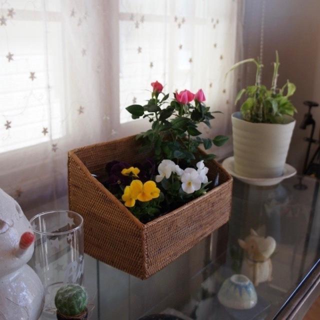 スパイス入れLサイズ (BOX372)  Rosily(ロージリー) バリ島 アタかご雑貨 キッチン収納
