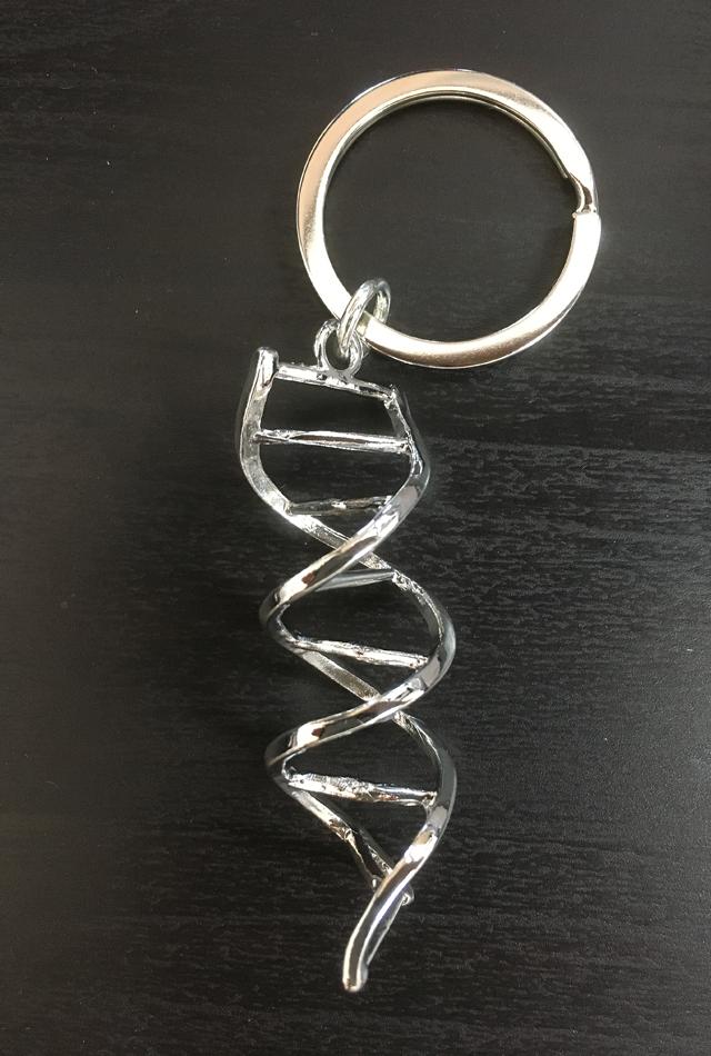 【アウトレット特価】アナトミーキーチェーン(DNA)【Anatomology】