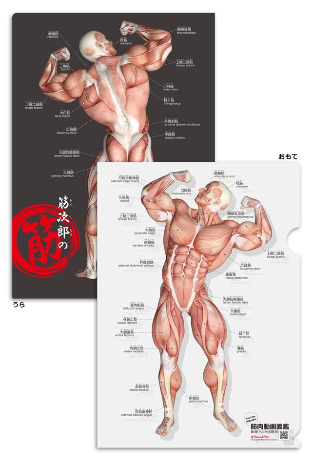 【新商品】筋次郎の筋 クリアファイル【日本語(ふりがな)・英語付】