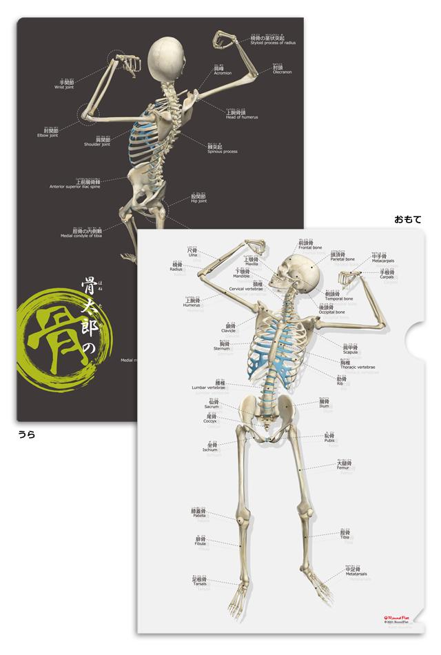 【新商品】骨太郎の骨クリアファイル【日本語(ふりがな)・英語付】