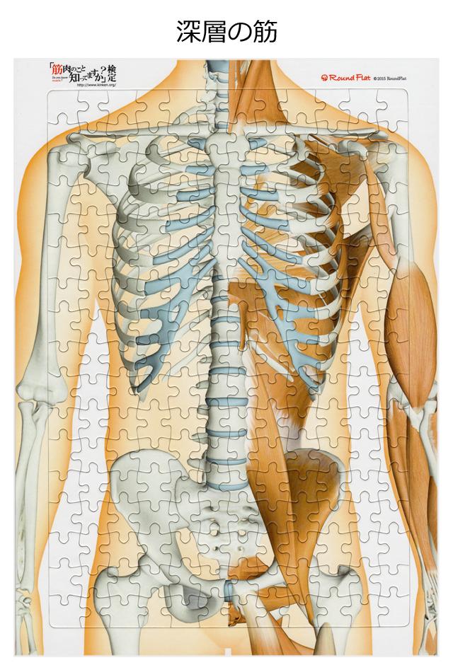 【アウトレット特価】体幹の筋(深層)【解剖学ジグソー】