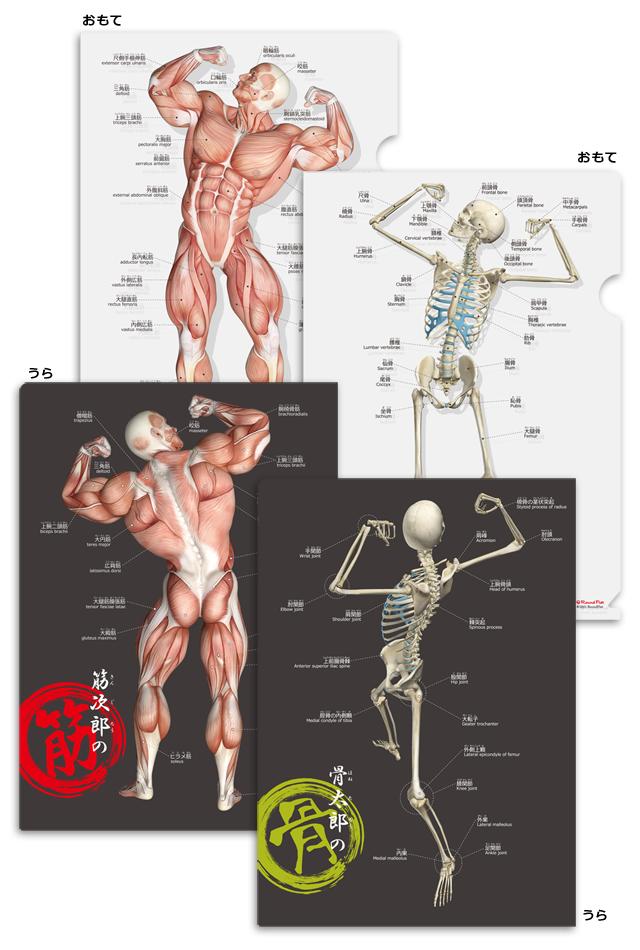 【新発売】筋次郎の筋+骨太郎の骨 クリアファイルセット【日本語(ふりがな)・英語付】
