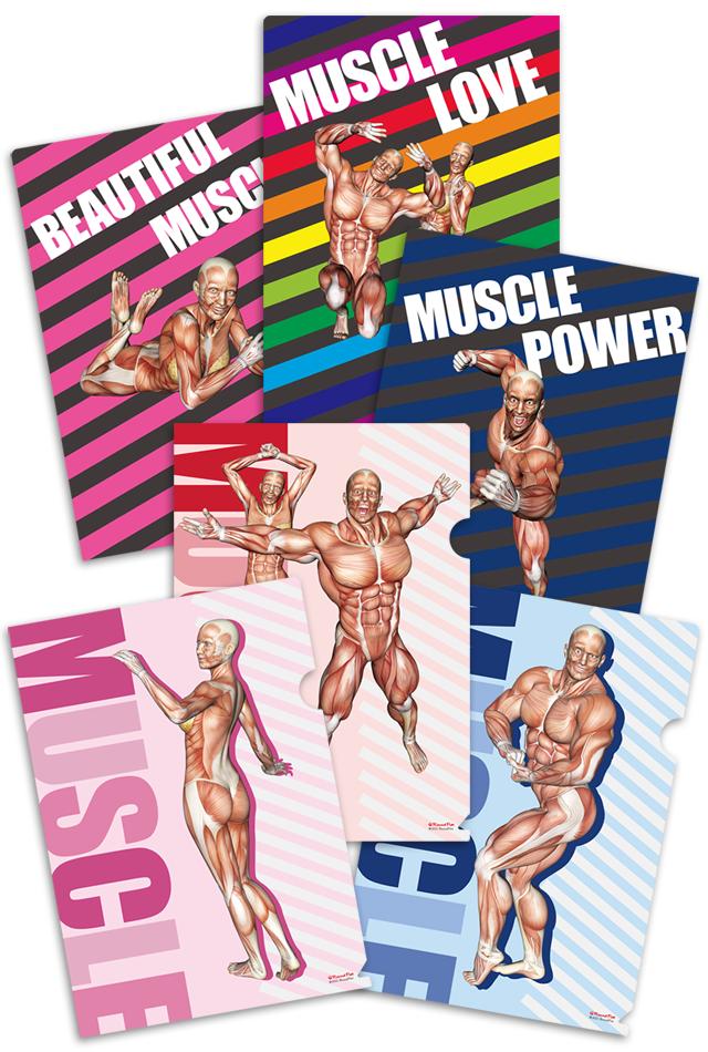 【新発売】筋次郎コレクション1 クリアファイル3枚セット【解剖学・ポーズ】