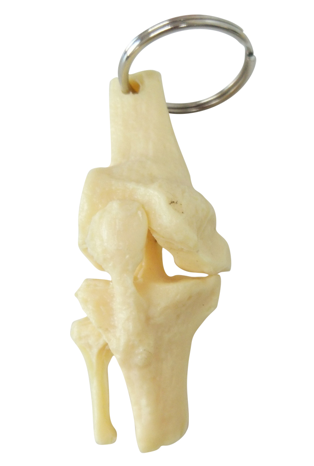 【人体模型】骨格キーホルダー(膝関節)【骨格標本】