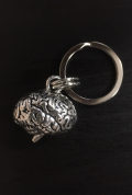 【アナトミーキーチェーン】脳(Brain)