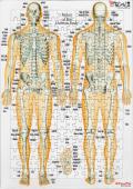 【アウトレット特価】全身の骨【解剖学ジグソー】