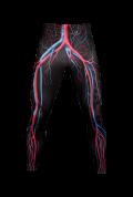 【速乾性スポーツウェア】循環系・レギンス(Circulatory Leggins)