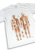 【解剖学Tシャツ】筋肉チャートデザイン《スポーツに最適》