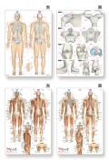 1人1セット限定【アウトレット特価】骨と関節&筋肉まるわかりシートセット【グッズ】