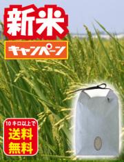 自然栽培コシ新米