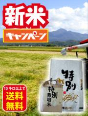 特別栽培コシヒカリ新米