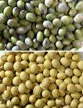 農場の青大豆