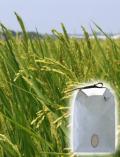自然栽培コシヒカリ