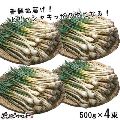島らっきょう 2kg (500gx4束)